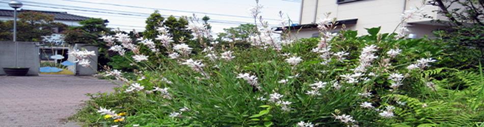 5月の植物-1